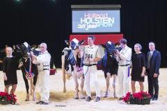 champions-intermediate-holstein_151212-0002