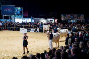 Maarliefst vier dochtergroepen tijdens de Holland Holstein sHow