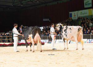 Opgave Holland Holstein sHow 2021 geopend